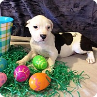 Adopt A Pet :: Yanni - East Sparta, OH