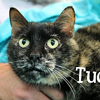Adopt A Pet :: Tudy - Wichita Falls, TX