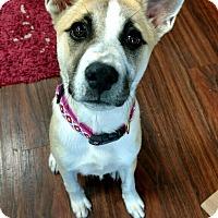 Adopt A Pet :: Allie - Marietta, GA