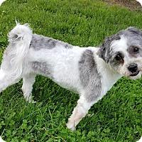 Adopt A Pet :: Emmie Lou - Sheridan, IL