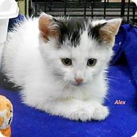 Adopt A Pet :: Alex - Oskaloosa, IA