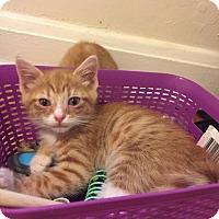 Adopt A Pet :: Rotini - Baltimore, MD