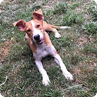 Adopt A Pet :: Junie - Sacramento, CA