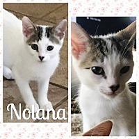 Adopt A Pet :: NolanaL - North Highlands, CA