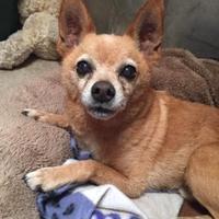 Adopt A Pet :: Tony - Ravenel, SC