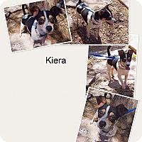 Adopt A Pet :: Kiera - Phoenix, AZ
