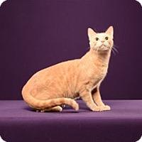 Adopt A Pet :: Fozzie - Cary, NC