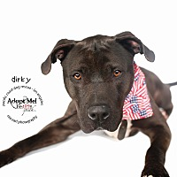 Adopt A Pet :: Handsome Dirky-VIDEO - Burbank, CA