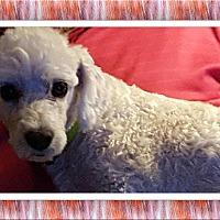 Adopt A Pet :: Adopted!! Dave - OK - Tulsa, OK