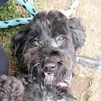 Adopt A Pet :: *ADDY - Long Beach, CA