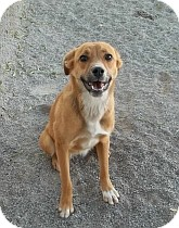 Shepherd (Unknown Type) Mix Dog for adoption in Silver City, New Mexico - Sam