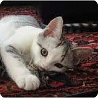 Adopt A Pet :: Meercat