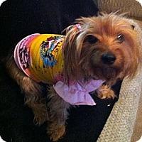 Adopt A Pet :: Carmel - Goodyear, AZ