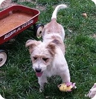 Terrier (Unknown Type, Medium) Mix Dog for adoption in Snyder, Texas - Sally
