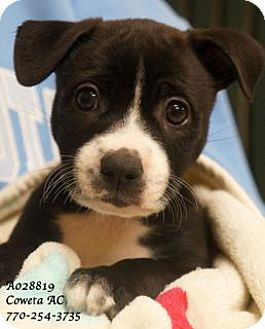 Terrier (Unknown Type, Medium) Mix Puppy for adoption in Walden, New York - Jill
