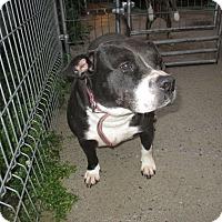 Adopt A Pet :: juliette - Cornwall, ON