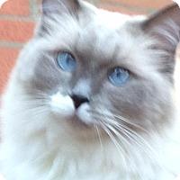 Adopt A Pet :: JJ and Anna - Fredericksburg, VA