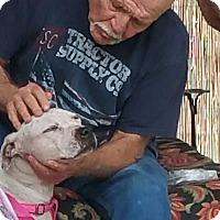 Adopt A Pet :: Lady - Sacramento, CA