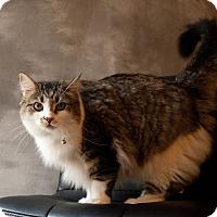 Adopt A Pet :: Precious - URGENT! - Delmont, PA