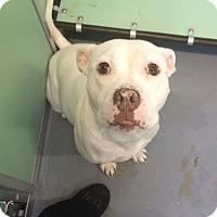 Adopt A Pet :: Nala - Fredericksburg, VA