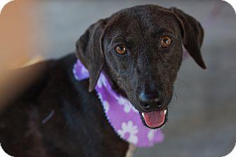 Labrador Retriever Mix Dog for adoption in Vancouver, British Columbia - Carmen