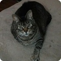 Adopt A Pet :: Orylee - McHenry, IL