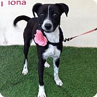 Adopt A Pet :: Fiona - San Diego, CA
