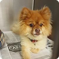 Adopt A Pet :: Pumba - conroe, TX
