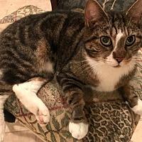 Adopt A Pet :: Maverick - Philadelphia, PA