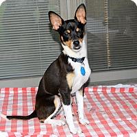 Adopt A Pet :: Dinah - Granbury, TX