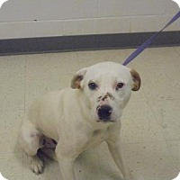 Adopt A Pet :: Jester - Lonely Heart - Gulfport, MS