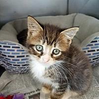 Adopt A Pet :: Greyson - Ruckersville, VA