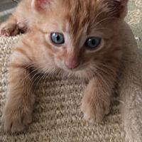 Adopt A Pet :: Pandora - Metairie, LA