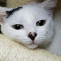 Adopt A Pet :: French Fry - Trevose, PA