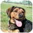 Photo 1 - Rottweiler/Beagle Mix Dog for adoption in Concordia, Kansas - Kapri
