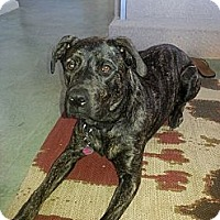 Adopt A Pet :: Jolie - Santa Monica, CA