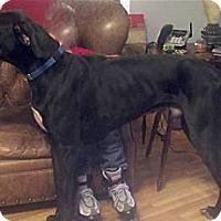 Adopt A Pet :: Zeus - Martinsburg, WV