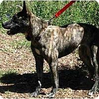 Adopt A Pet :: Lissette (Flagstaff) - Scottsdale, AZ