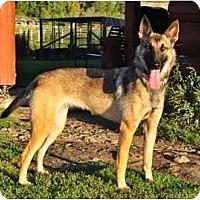 Adopt A Pet :: Piper - Hamilton, MT
