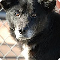 Adopt A Pet :: Oscar - Minneapolis, MN