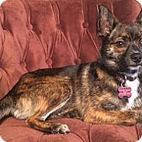 Adopt A Pet :: Hash Brown - Salem, OR