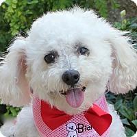 Adopt A Pet :: Snuggles - La Costa, CA