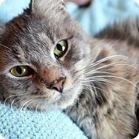 Adopt A Pet :: Murray - Xenia, OH
