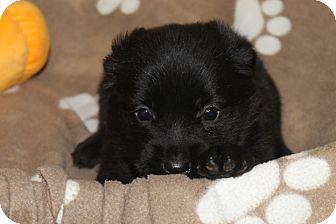 Terrier (Unknown Type, Medium) Mix Puppy for adoption in Waldorf, Maryland - Mila