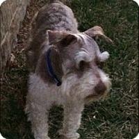 Adopt A Pet :: ARTHUR - Fort Worth, TX