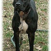 Adopt A Pet :: Roo - Cincinnati, OH