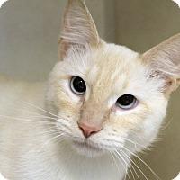Adopt A Pet :: Bonju - Chicago, IL