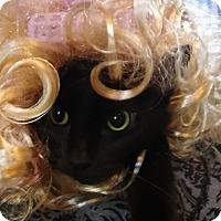 Adopt A Pet :: Spooky - Witter, AR