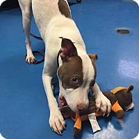 Adopt A Pet :: Aviatrix - Villa Park, IL
