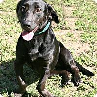 Adopt A Pet :: Jenny - Lufkin, TX